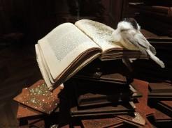 la-bibliotheque-livre
