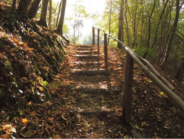 Take An Autumn Walk WithMe